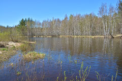 River in spring forest. Royalty Free Stock Images