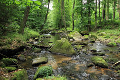 River in the spring forest Royalty Free Stock Image