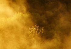 Spring morning by the picturesque river, golden rays in the fog Stock Photography