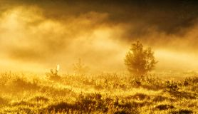 Spring morning by the picturesque river, golden rays in the fog Royalty Free Stock Photo