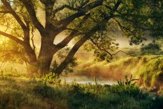 Spring morning by the picturesque river, golden rays in the fog Stock Photo