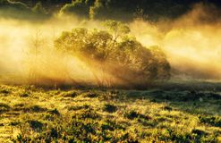 Spring morning by the picturesque river, golden rays in the fog Stock Images