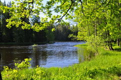 River in spring Stock Images