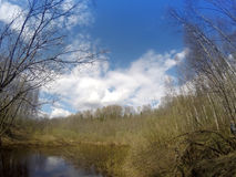 The river in the spring wood Stock Photos