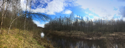 The river in the spring wood, a birch bent over water Royalty Free Stock Photography