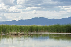 River in steppe. prairie Stock Photography