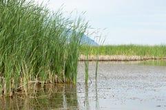 River in steppe. prairie Stock Photos