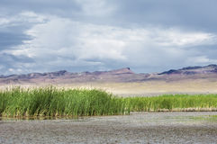 River in steppe. prairie Royalty Free Stock Photography