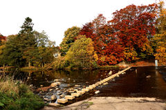 River stepping stones with autumn colours. A view of the river with stepping stones and a ford with all the autumn colours showing on the trees.reds gold yellow Royalty Free Stock Photos