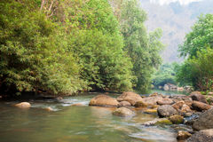 The river and stone with tree in forest  beautiful nature of Asi Stock Image
