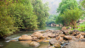 The river and stone with tree in forest  beautiful nature of Asi Stock Photos