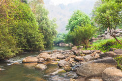 The river and stone with tree in forest  beautiful nature of Asi Stock Photography