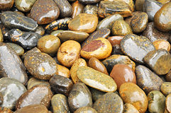 River stones. Mixed brown stones as background Stock Image