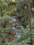 River with stones in the middle of a dense forest of trees. Vertical Royalty Free Stock Images