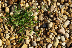 River stones with patch of grass background. Natural smooth river stones fill the image, there is also a patch of grass on the ground Stock Image