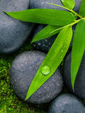 The River Stones spa treatment scene and bamboo leaves with rain Royalty Free Stock Images