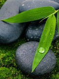 The River Stones spa treatment scene and bamboo leaves with rain Stock Image
