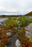 River, stones, taiga, fog Stock Photo