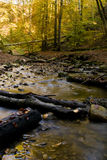 River stream in autumn forest. With fallen wooden logs Royalty Free Stock Photo