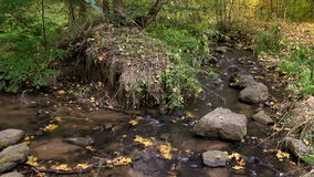 River stream in autumn forest Royalty Free Stock Images