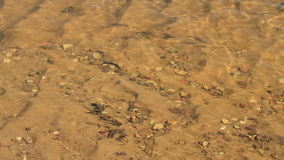 River Stream Background stock video
