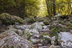 River stream in colorful autumn forest in Slovenia Royalty Free Stock Photo