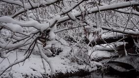 River stream with fallen trees in the forest in winter. A river in a snow covered forest. River stream with fallen trees in the forest in winter stock footage