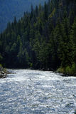 River Stream Flowing Pine Forest Mountains Stock Photos