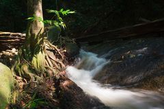A River Stream Flowing Through A Tree Root royalty free stock images