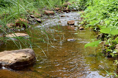 River stream in a forest. Beautiful summer landscape. Royalty Free Stock Photos