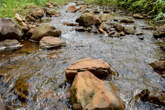 River stream in a forest. Beautiful summer landscape. Stock Photography