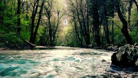 River stream through forest in a mountain. This is footage of River stream through forest in a mountain stock footage