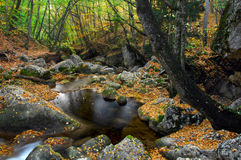 River stream in high mountain in autumn Royalty Free Stock Image