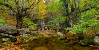 River stream in high mountain in autumn Stock Photos