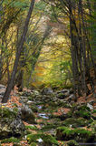 River stream in high mountain in autumn. Of Crimea Stock Image