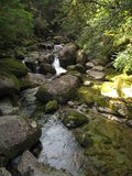 River stream inside cedar forest. River stream and stones inside Japanese cedar forest, Yakushima Island, Kagoshima Prefecture, Japan Stock Photo