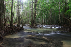 River stream at Krabi Thailand Royalty Free Stock Image