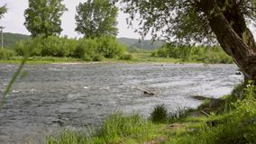 River stream landscape. River water flowing. Summer nature background stock video