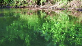 A river stream with reflections. A flowing river on a sunny evening with green trees reflecting in water stock footage