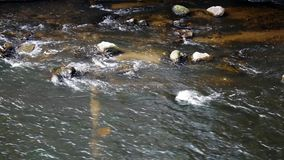 River stream with rocks stock video footage