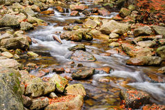 River stream with rocks and autumn leaves Stock Photography