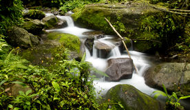 River stream. With rocks and grasses Stock Photo