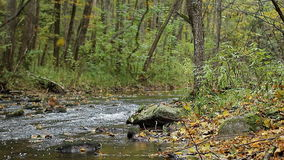 River stream running over rocks. Fall. October. The river flows along the shores, forested stock video