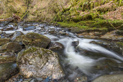 River Stream Stock Images