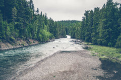 River stream surrounded by pine trees Stock Photo