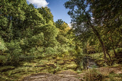 River strid near Bolton Abbey in yorkshire, England Stock Images