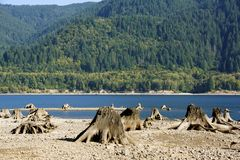 RIVER AND STUMP BEACH. Old stumps lining a rocky, river bed and a forest background Royalty Free Stock Images