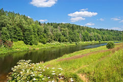 River in summer. The quiet Moskva river with green wood on coast Royalty Free Stock Image