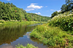 River in summer. The quiet Moskva river with green wood on coast stock photos
