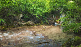 River in summer canyon Royalty Free Stock Images